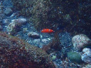ooshima 083