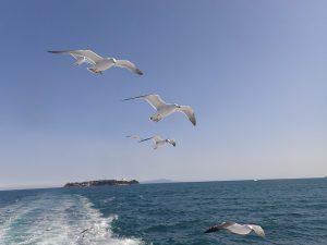hatsushima 073